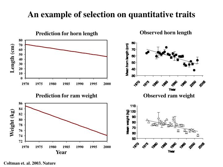 An example of selection on quantitative traits