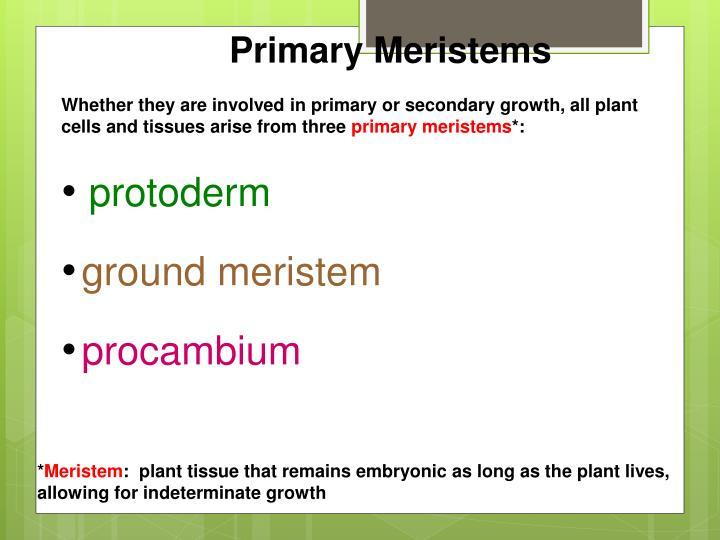 Primary Meristems