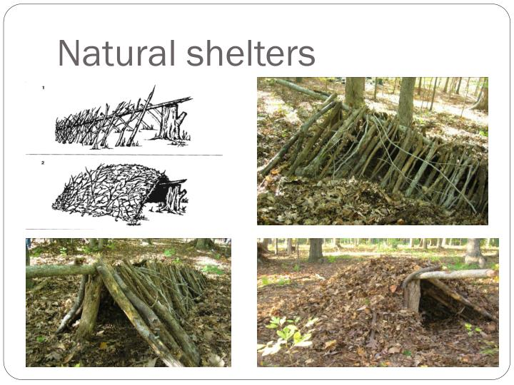 Natural shelters