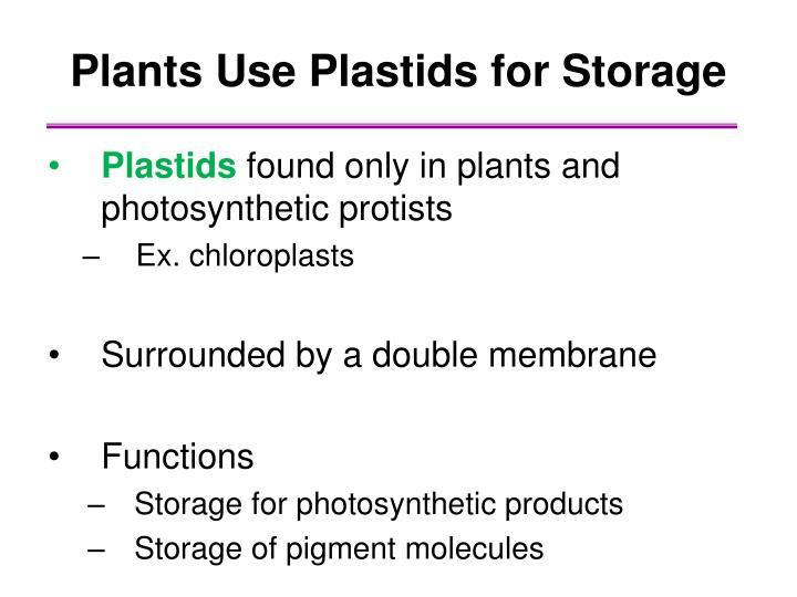 Plants Use Plastids for Storage