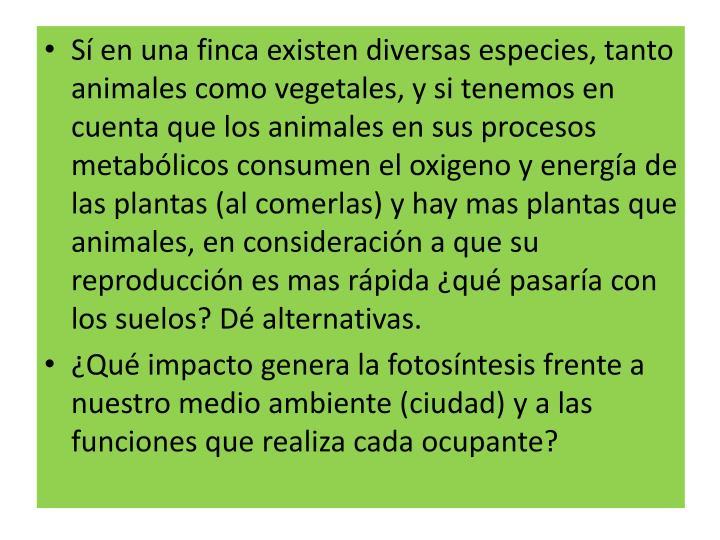Sí en una finca existen diversas especies, tanto animales como vegetales, y si tenemos en cuenta que los animales en sus procesos metabólicos consumen el oxigeno y energía de las plantas (al comerlas) y hay mas plantas que animales, en consideración a que su reproducción es mas rápida ¿qué pasaría con los suelos? Dé alternativas.