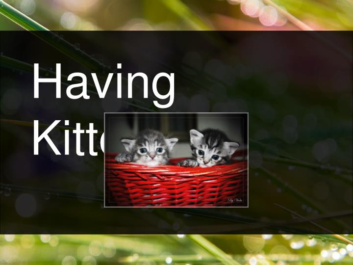 Having Kittens