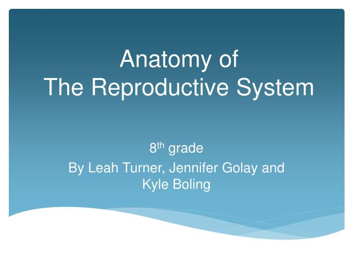 Anatomy of the reproductive system
