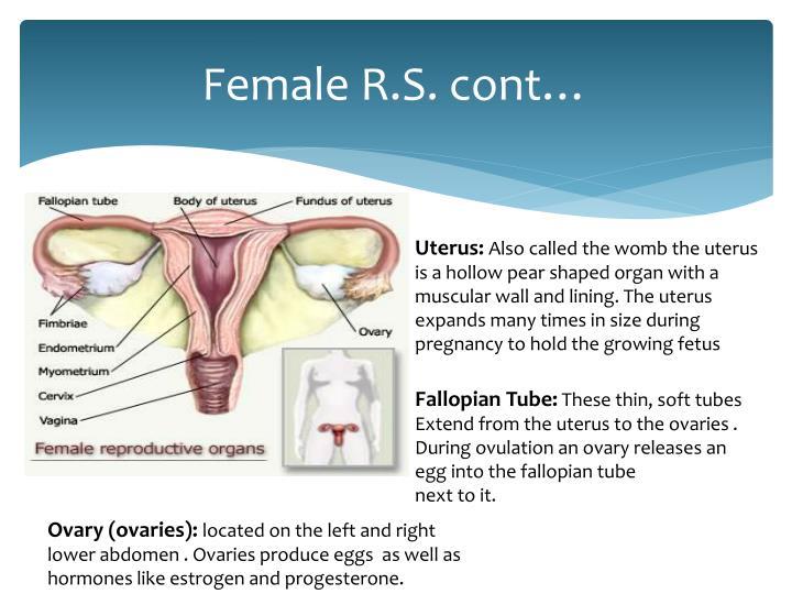 Female R.S.