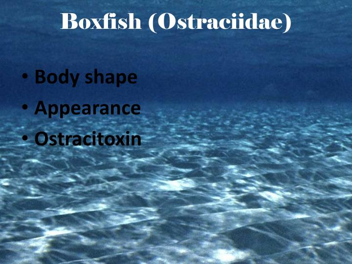 Boxfish (