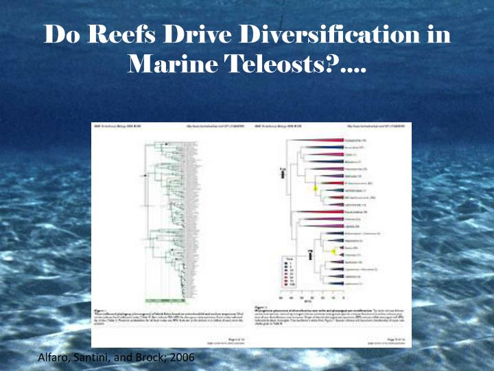 Do Reefs Drive Diversification in Marine