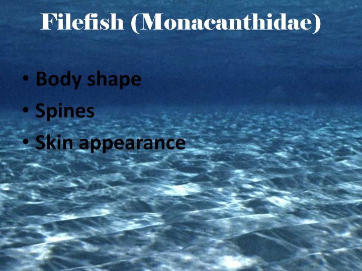 Filefish (