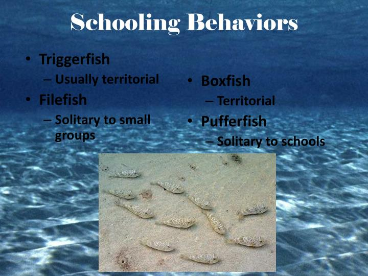 Schooling Behaviors
