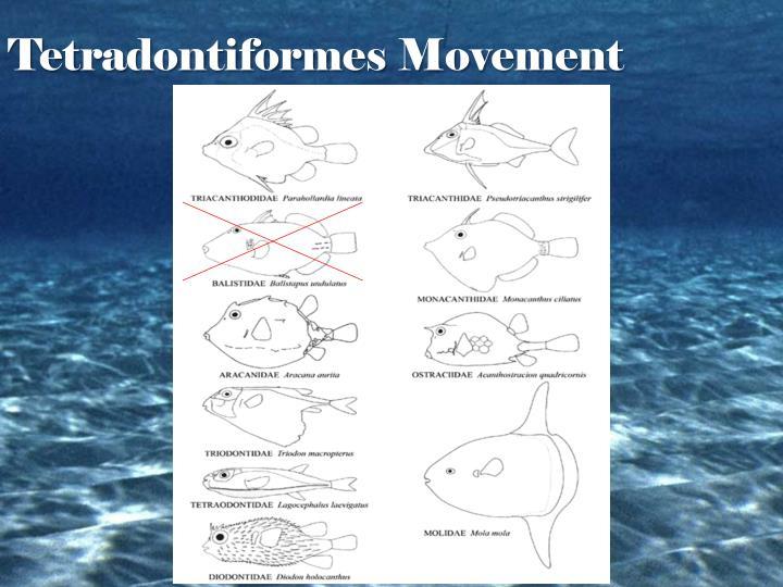 Tetradontiformes