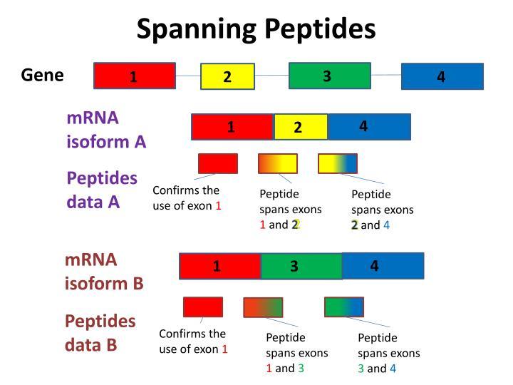 Spanning Peptides