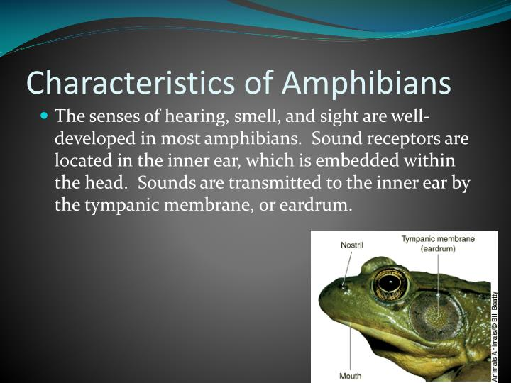 characteristics of reptiles Related to reptiles a teacher's resource packet for grade 2 describe the characteristics of reptiles list the characteristics on chart paper and display in.