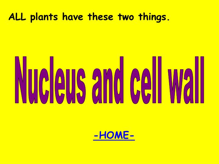 ALL plants have these two things.