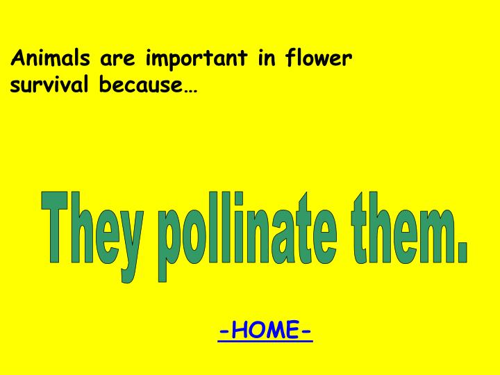 Animals are important in flower