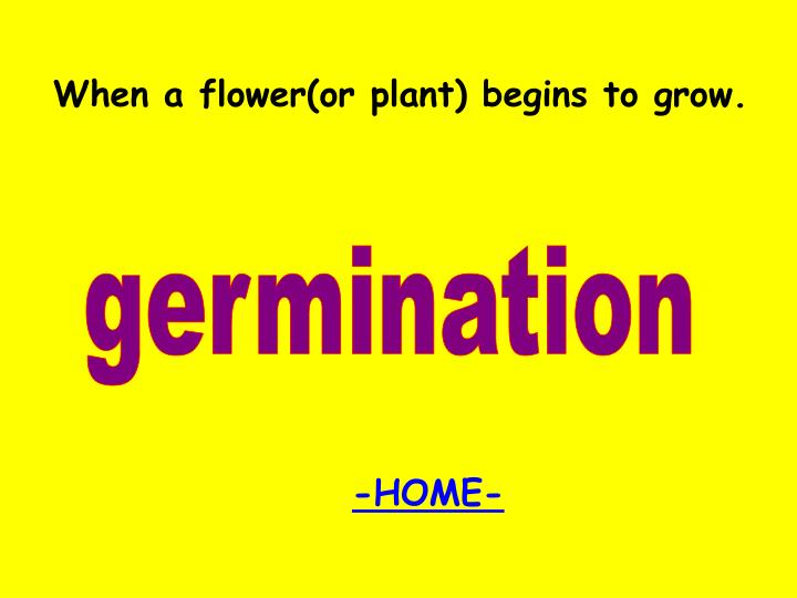 When a flower(or plant) begins to grow.