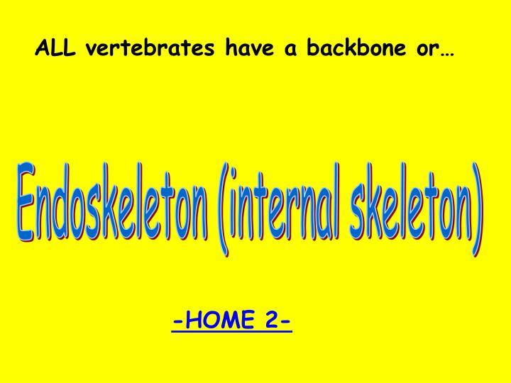 ALL vertebrates have a backbone or…