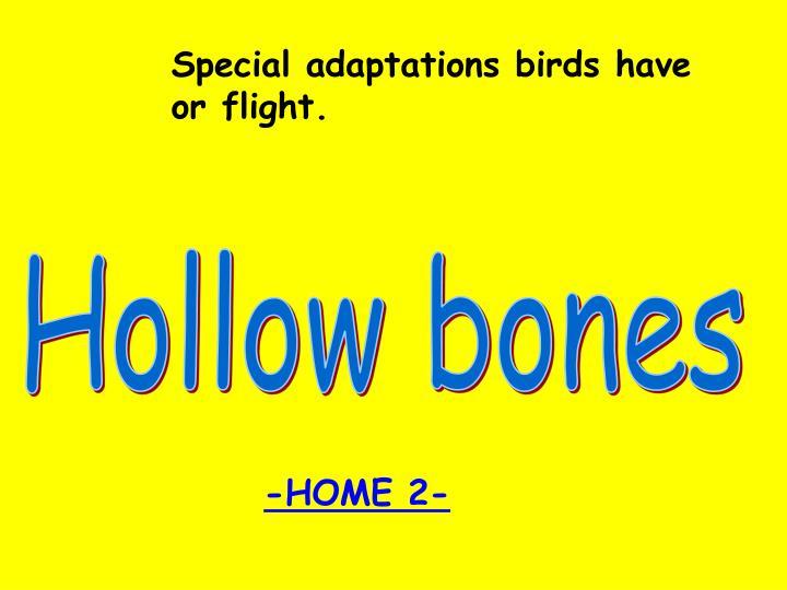 Special adaptations birds have