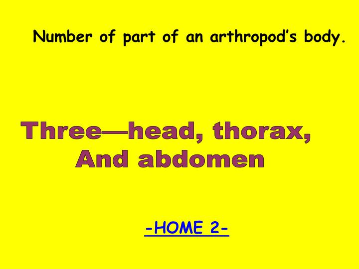 Number of part of an arthropod's body.