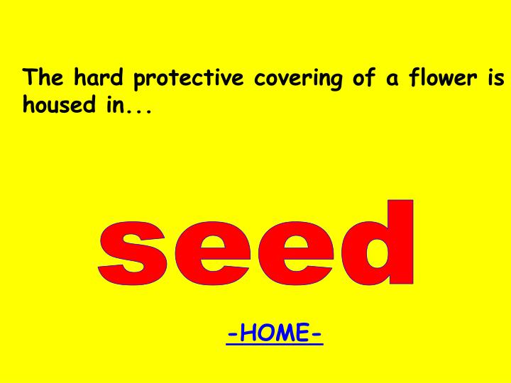 The hard protective covering