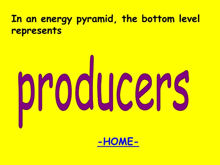 In an energy pyramid, the bottom level represents