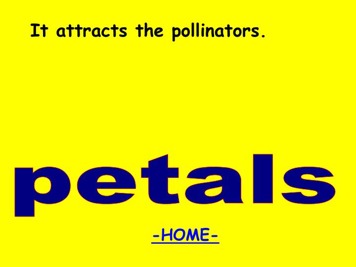 It attracts the pollinators.