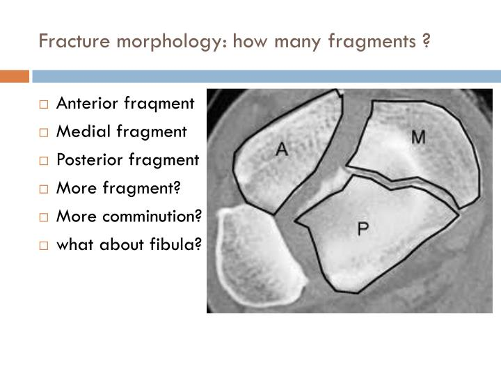 Fracture morphology: how many fragments ?
