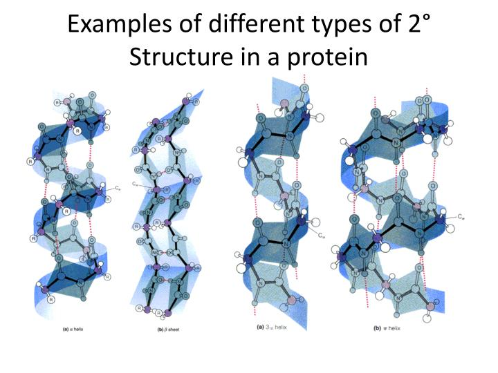 Examples of different types of 2 structure in a protein