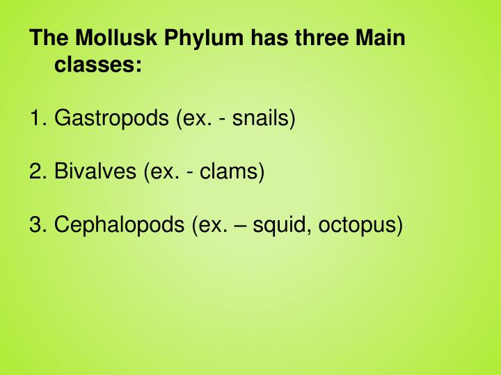 The Mollusk Phylum has three Main  classes: