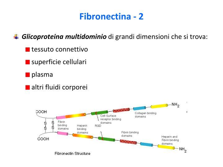 Fibronectina - 2