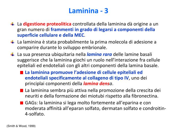 Laminina - 3