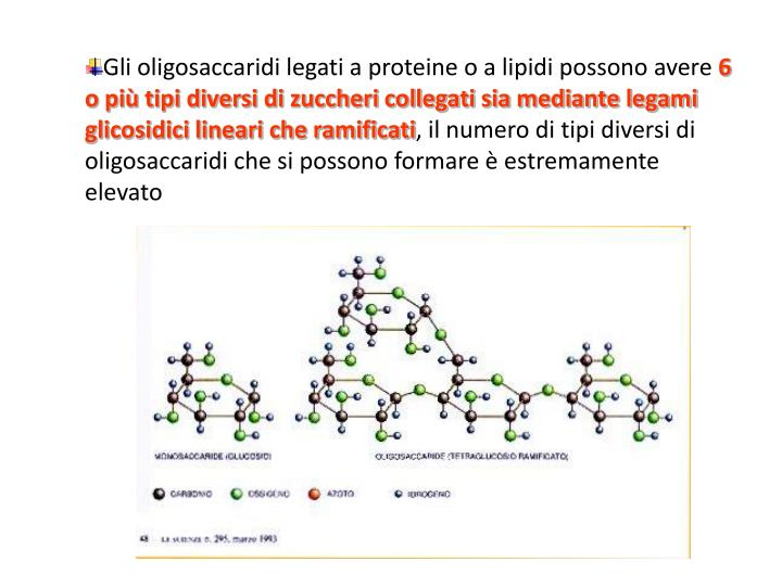 Gli oligosaccaridi legati a proteine o a lipidi possono avere