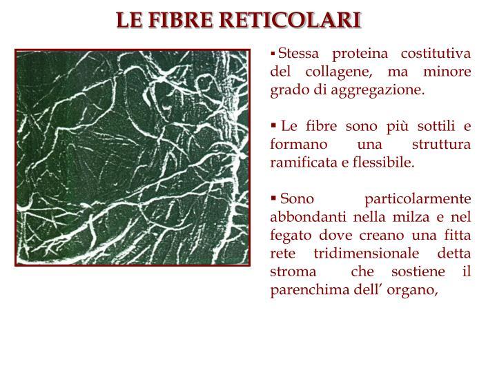 Stessa proteina costitutiva del collagene, ma minore grado di aggregazione.