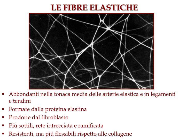 LE FIBRE ELASTICHE