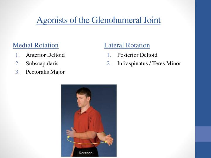 Agonists of the