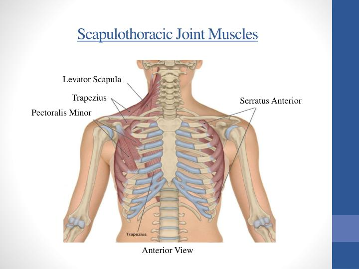 Scapulothoracic