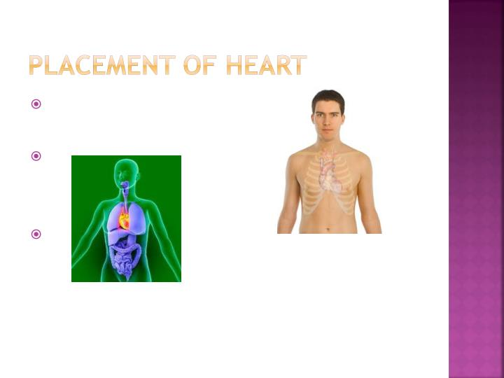 Placement of Heart