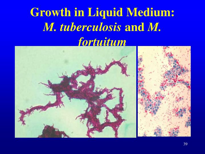 Growth in Liquid Medium: