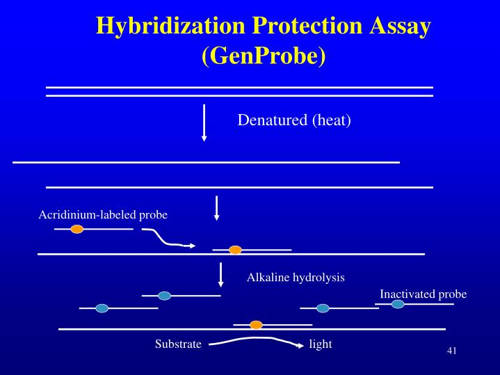 Hybridization Protection Assay (GenProbe)