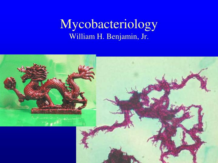 Mycobacteriology william h benjamin jr