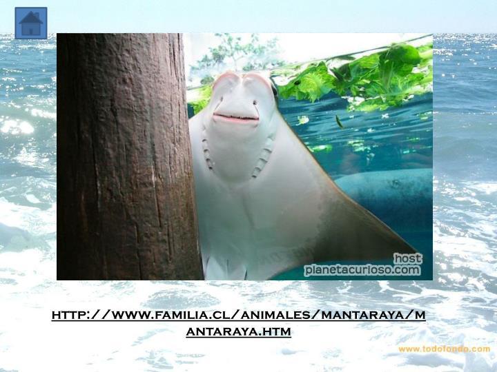 http://www.familia.cl/animales/mantaraya/mantaraya.htm