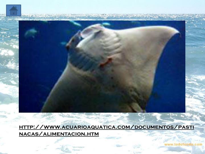 http://www.acuarioaquatica.com/documentos/pastinacas/alimentacion.htm
