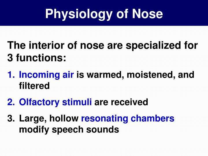 Physiology of nose