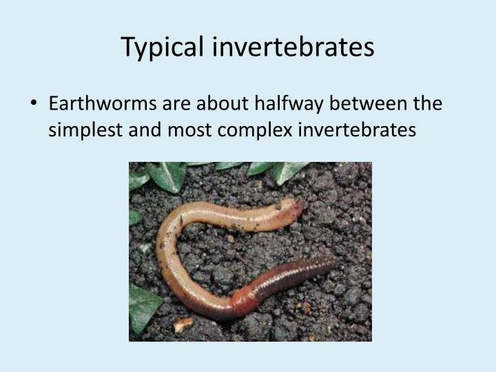 Typical invertebrates
