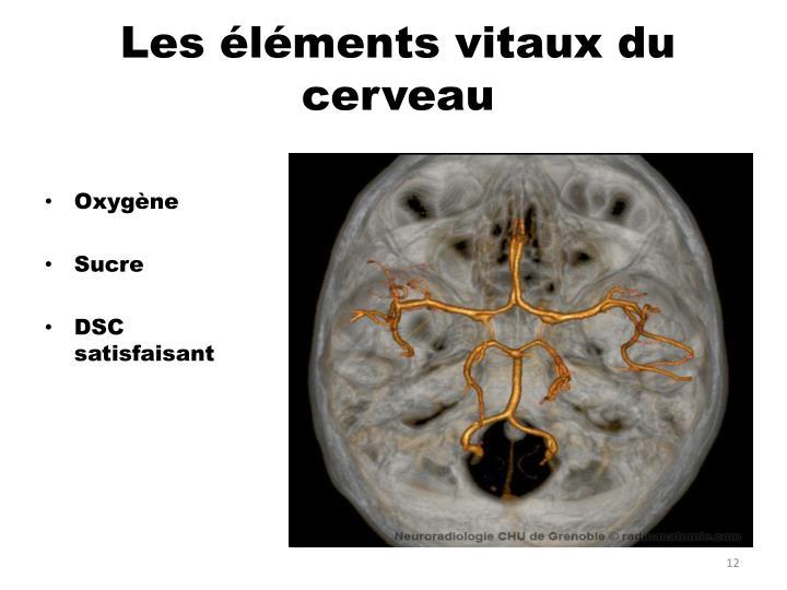 Les éléments vitaux du cerveau