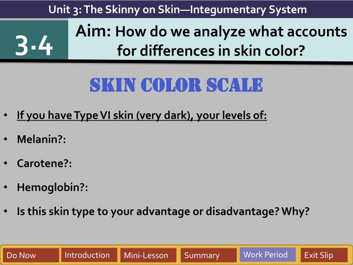 Unit 3: The Skinny on Skin—Integumentary System