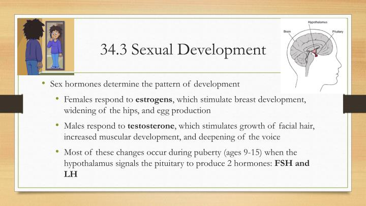 34 3 sexual development