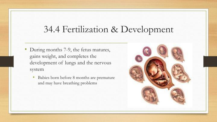 34.4 Fertilization &