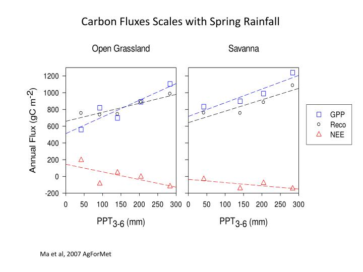 Carbon Fluxes