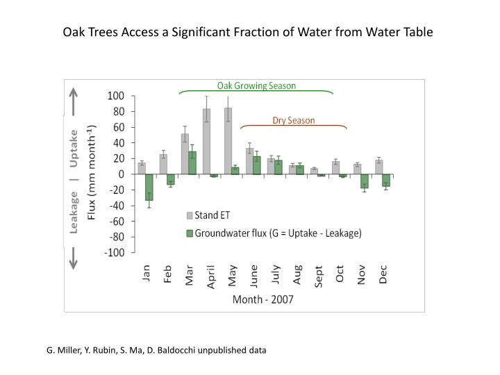 Oak Trees Access a Significant Fraction of Water from Water Table