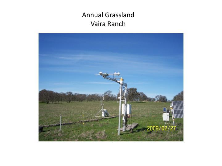 Annual Grassland