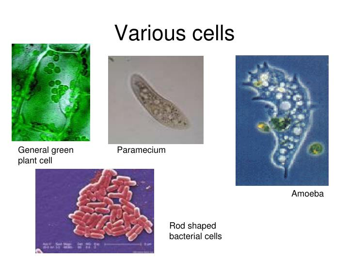 Various cells